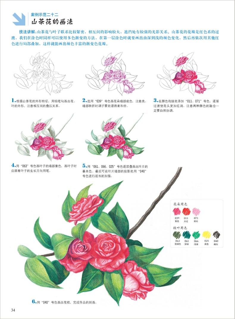 4册套装 彩色铅笔画 花草水果美食动物手绘画彩铅画入门教程书 素描