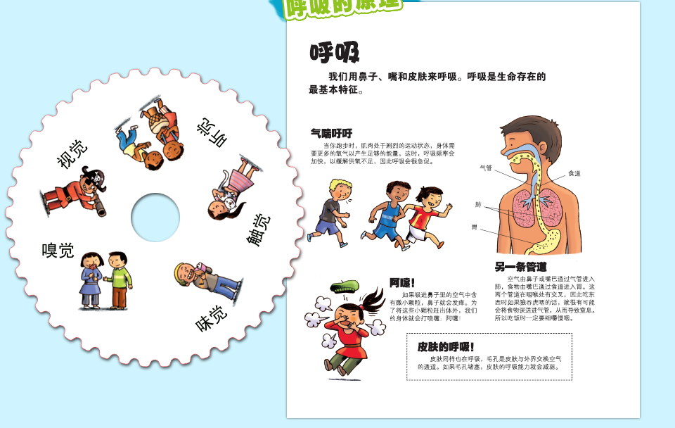 我们的身体绘本 儿童3d立体书 人体结构书籍儿童版 乐乐趣科普翻翻书图片