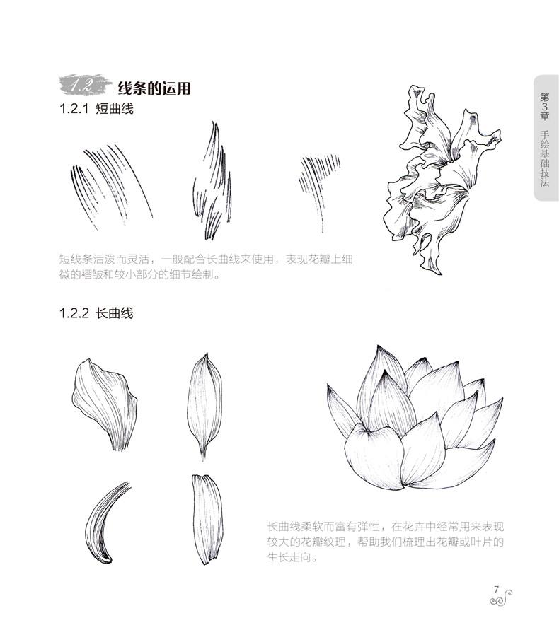 昙花手绘插画图